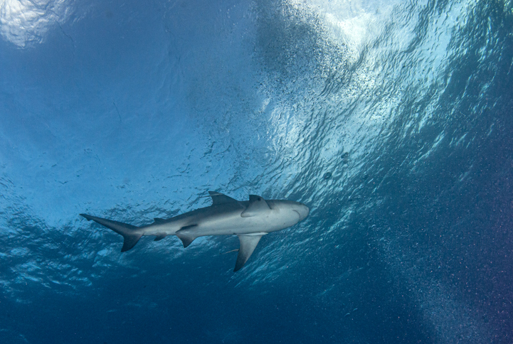 Article image for Research into bull shark numbers as man recovers from more surgery