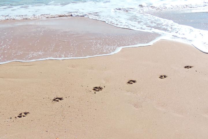 Woman recalls frightening encounter at Perth dog beach