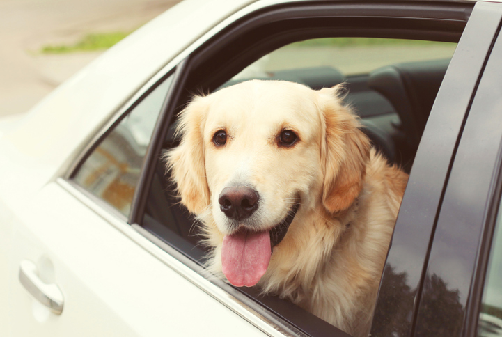 The new app allowing pets to travel unaccompanied