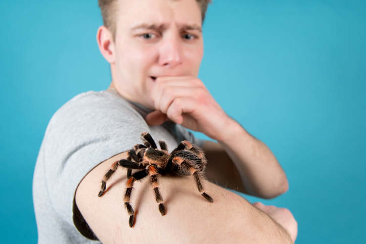 Article image for How an app could help you tackle a fear of spiders