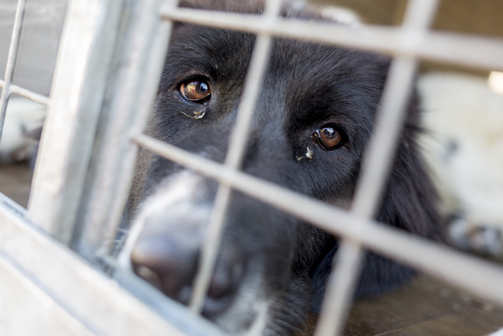 Article image for WA animal cruelty hotspots revealed