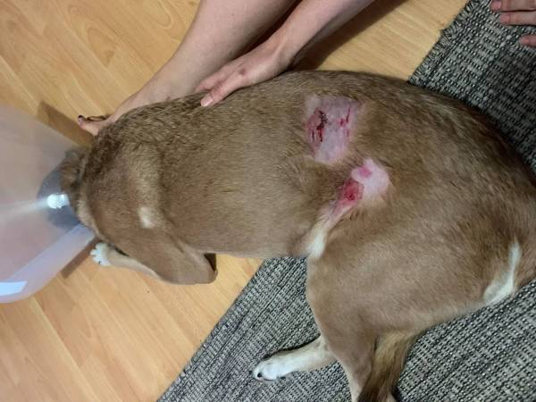 Article image for 'It went for her throat': Second Spearwood dog attack victim speaks out