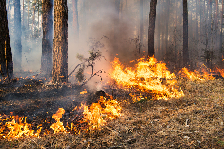Article image for Why a scientist says prescribed burns are NOT effective in preventing bushfires