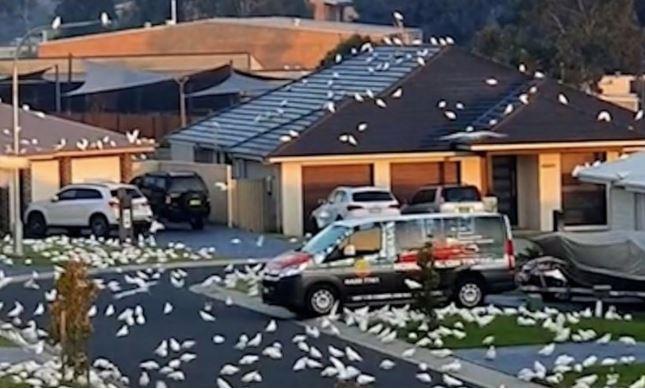 Article image for WHAT'S TRENDING | Bird 'apocalypse' hits suburban NSW street