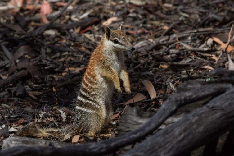 Article image for Scientists call for changes to bushfire mitigation in WA