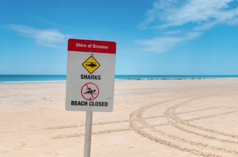 Article image for BREAKING   Diver attacked by shark off Broome beach