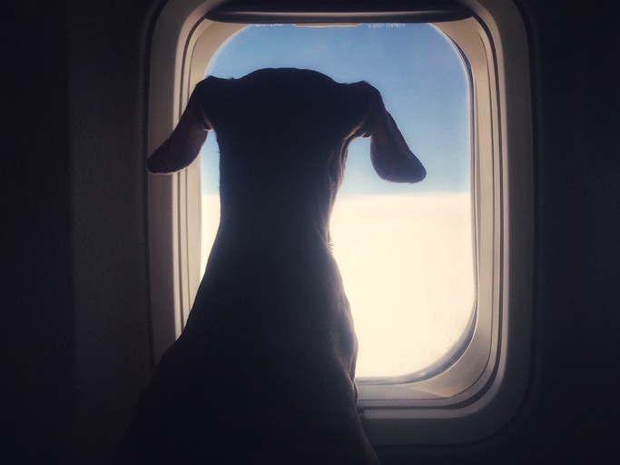 Article image for Pets could soon be allowed to travel in Australian plane cabins