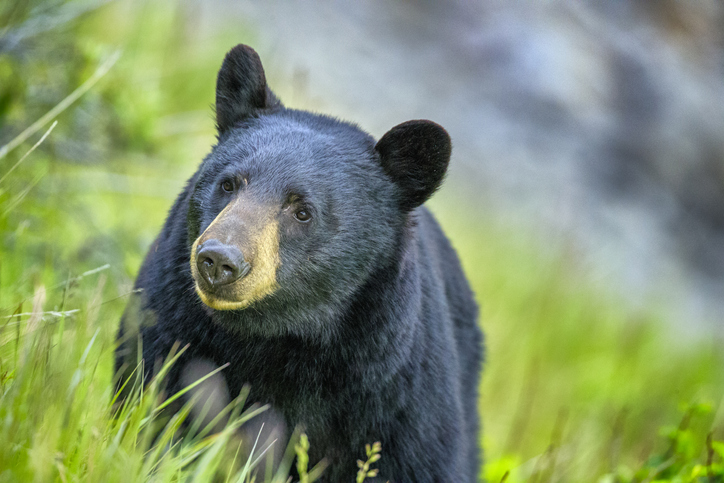 Article image for What's Trending   US man finds bear locked in his car