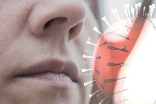 Article image for Scientists discover microscopic 'scissors' could kill COVID-19 in the nose