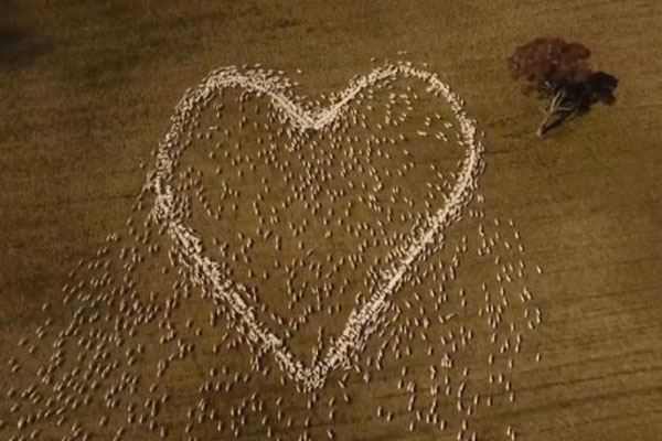 Article image for What's Trending | NSW farmer's touching tribute