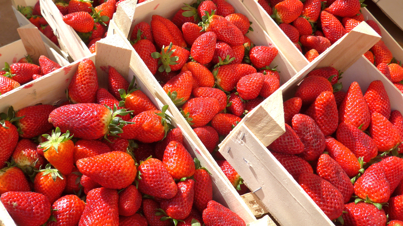 Article image for 'Pick-your-own': Why WA strawberry farms are opening to the public early