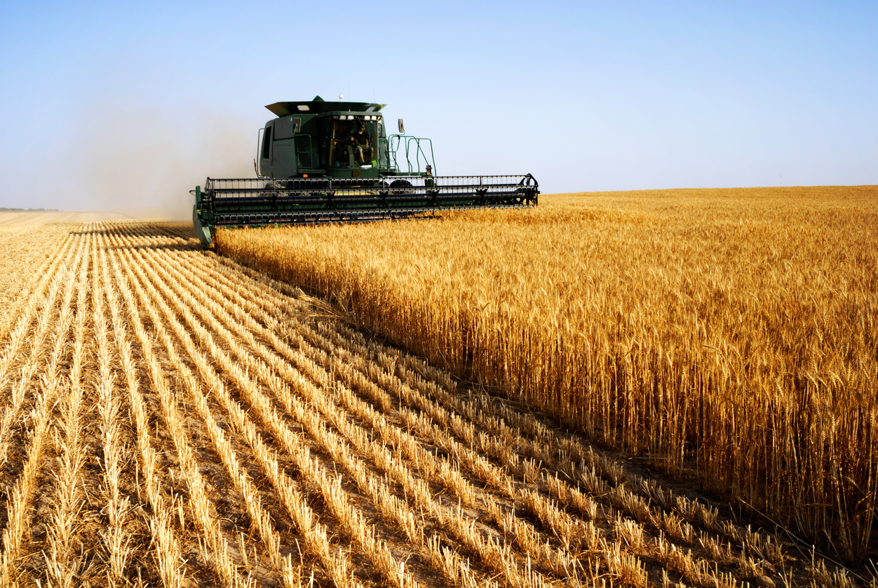 Article image for Grain harvest in jeopardy amid critical worker shortage