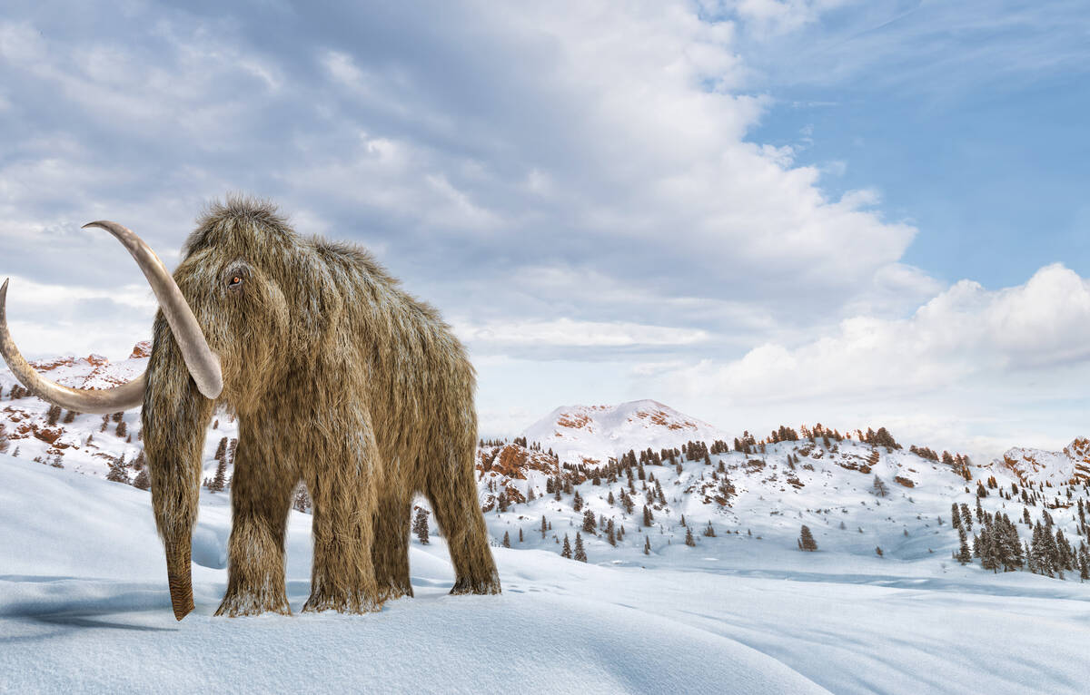 Article image for Scientists want to resurrect the wooly mammoth in 'de-exctinction' project
