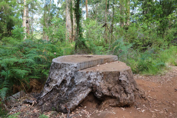 Article image for Logging ban – 'We're in a bit of shock'