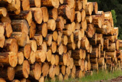 'We want answers': Logging industry claim they've been blindsided by native forestry ban