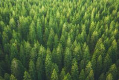Federal government points finger at state governments for delivering only 1% of 1 billion tree promise