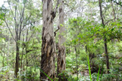 Timber industry says logging ban will significantly impact supply of jarrah firewood